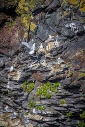 Jyrkät kalliorannat olivat lintujen valloittamia.